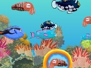 Find the fish game