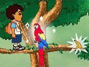 Game Diego in the rain forest